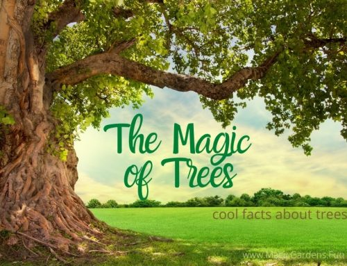 The Magic of Trees