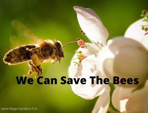 We Can Save The Bees